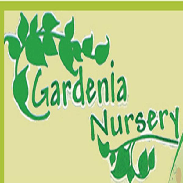 Gardenia Nursery